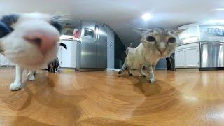 5 Cute Cats VR  (360° video)