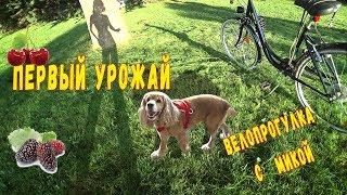 Велопрогулка с собакой . Первый урожай в Краснодаре