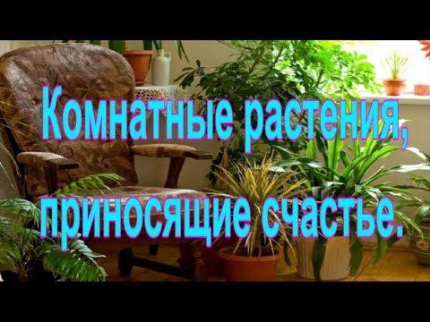 Комнатные растения, приносящие счастье.