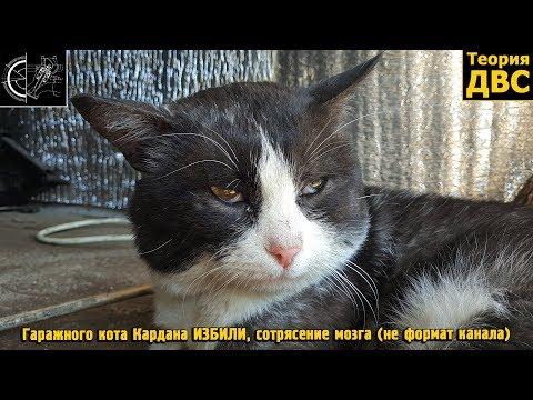 Гаражного кота Кардана ИЗБИЛИ, сотрясение мозга (не формат канала)