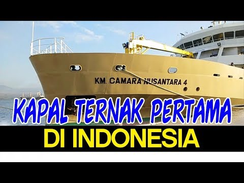 Kapal Ternak Camara Nusantara IV Angkut Sapi dari Kabupaten Bima NTB #SAPIBAGUS