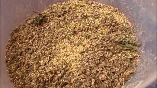 Quinoa Processing