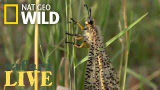 Safari Live - Day 132 | Nat Geo Wild