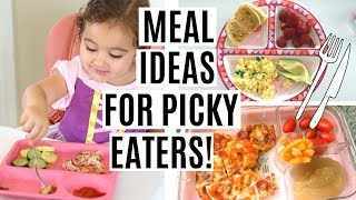 WHAT MY TODDLER EATS IN A DAY | TODDLER MEAL IDEAS FOR PICKY EATERS!