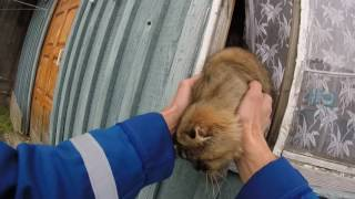 Смотреть онлайн Кота вытащили из заброшенного дома
