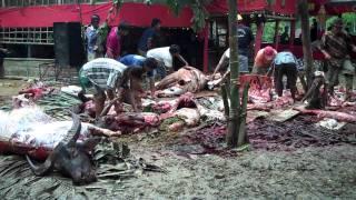 preview picture of video 'Dieren offeren voor begrafenis (Tana Toraja).MP4'