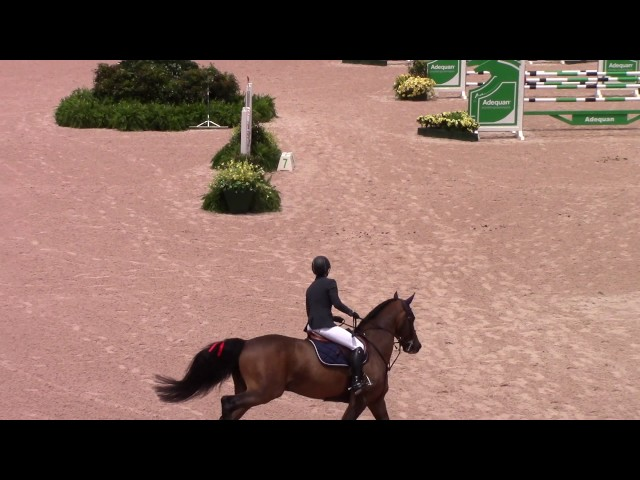 Half-sister Grand Prix KWPN stallion Zelote VDL, rider Tina di Landri.