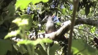 preview picture of video 'Balade au trou de fer 12 décembre 2009'