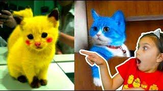 СМОТРИ САМЫЕ СМЕШНЫЕ КОТЫ! ЛУЧШИЙ НЕ ЗАСМЕЙСЯ ЧЕЛЛЕНДЖ! Funny Cats Попробуй не засмеяться Валеришка
