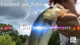 Summertime Bassin
