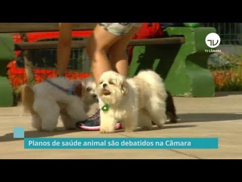 Planos de saúde animal são debatidos na Câmara - 17/09/19