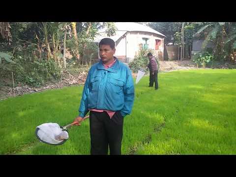 আদর্শ বীজতলা করার উপকারিতা এবং ফসলে বালাই জরিপ সম্পর্কে কৃষকের অভিমত