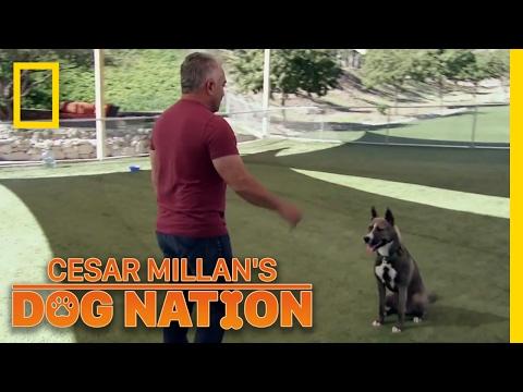 Learning Control | Cesar Millan's Dog Nation
