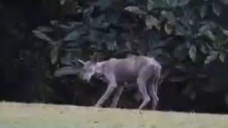 10 Mysterious Creatures Caught In Dubai