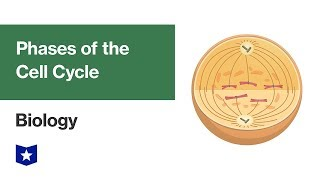 Phases of the Cell Cycle | Biology