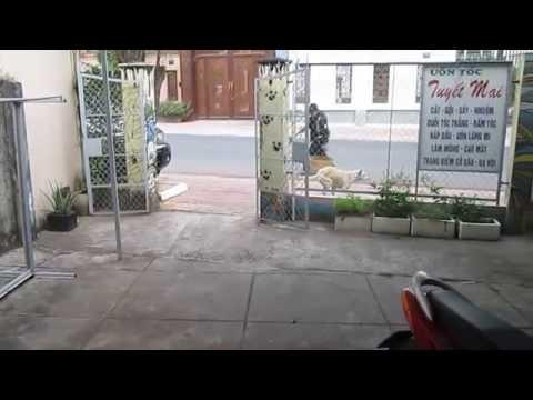 Chó chơi lăng ba đi bộ