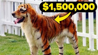World's MOST EXOTIC and EXPENSIVE PETS
