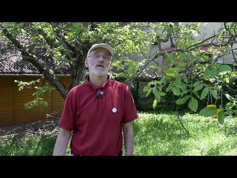 Humán papillomavírus fertőzés elleni vakcina