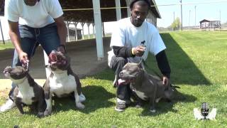 BULLY TALK WITH ZEB PITS...THE EXOTIC TAKEOVER