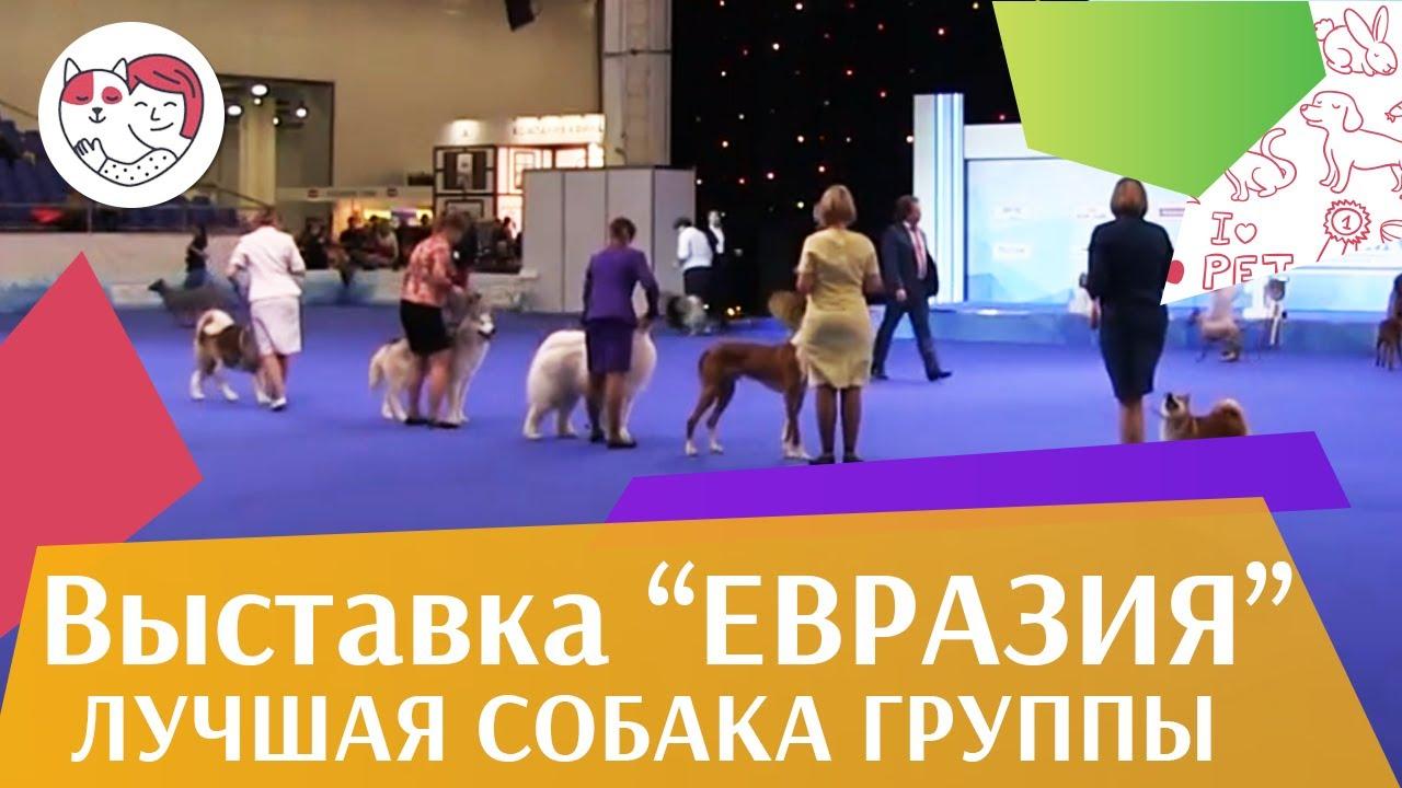 Лучшая собака 5 группы по классификации FCI 19 03 17 на Евразии ilikepet