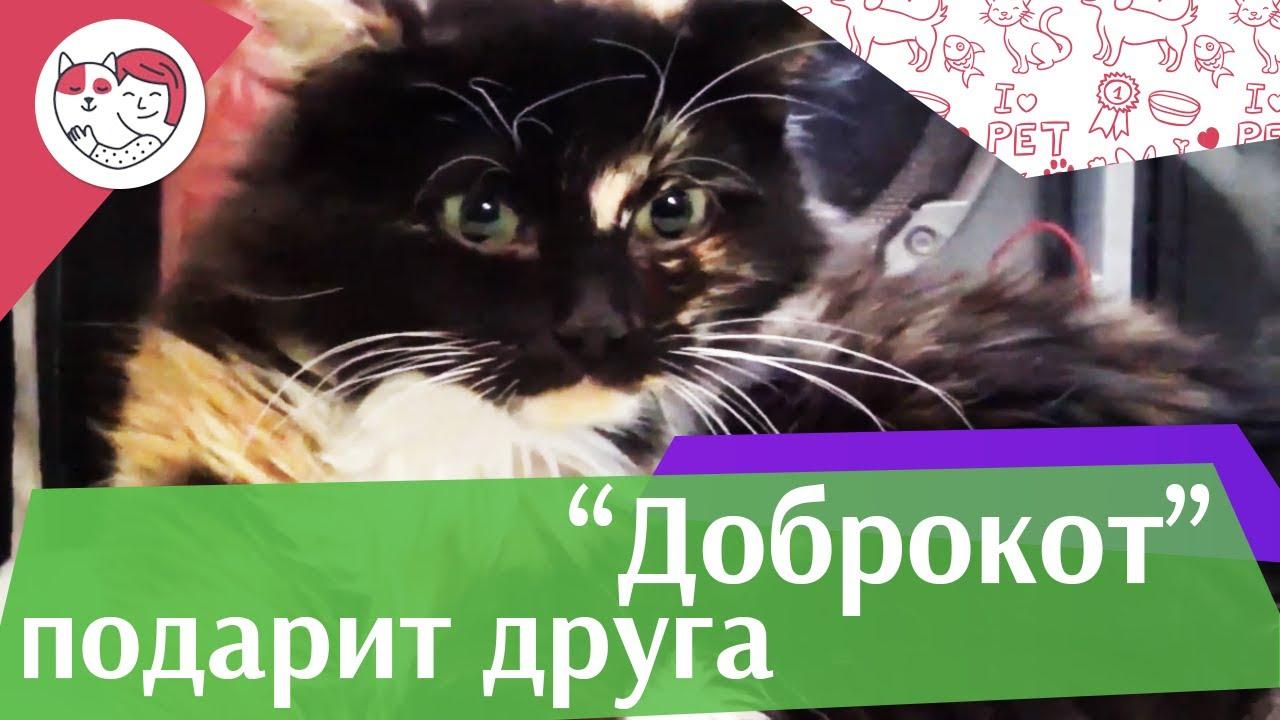 "Благотворительная акция ""Доброкот"" на ilike.pet"