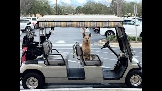 THE VILLAGES -  Golf Cart Buying Tips