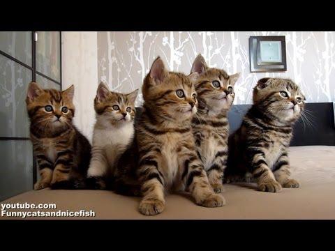 一羣小貓咪究竟被什麼吸引住呢?好可愛~