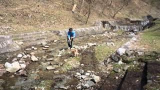 柴犬大和と川渡りきらずフランス式の河原で