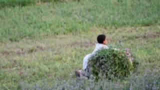 farmer boy struggles with harvest