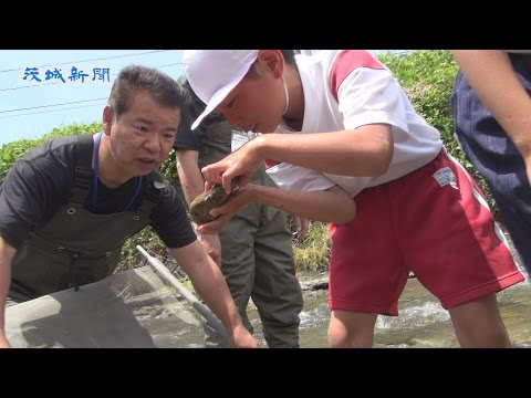 里美小学校の4年生が里川の水質を調査