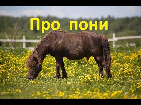 Про пони