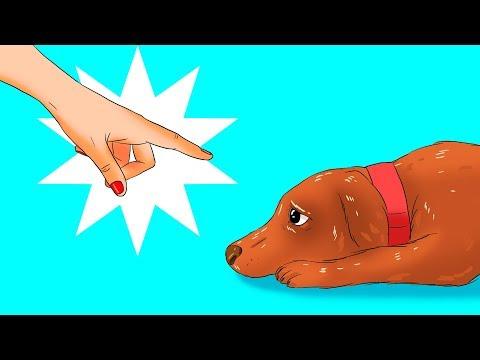 12 cose pericolose per il tuo cane che fai senza rendertene conto