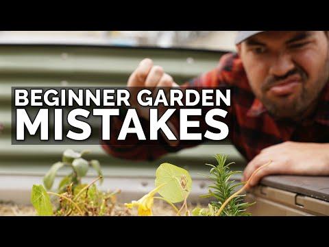 The Biggest Gardening Mistakes for Beginner Gardeners