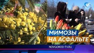 В канун 8 марта на улицах Новгорода расцвела несанкционированная торговля мимозами