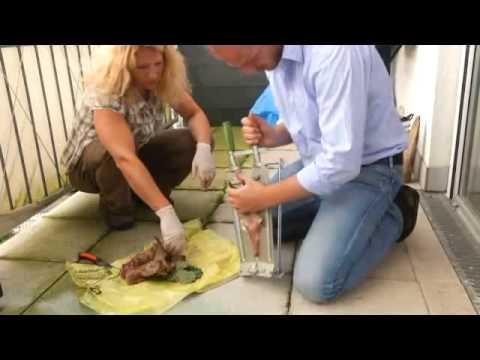 DJZ-TV: Abkochen einer Rehbock-Trophäe