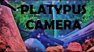 Platypus Habitat 2