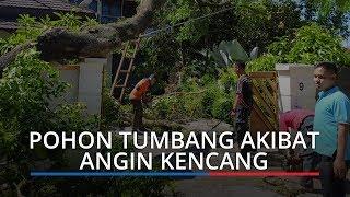 17 Pohon Tumbang Akibat Angin Kencang di Padang, 3 Rumah Tertimpa, Akses Jalan Terhambat
