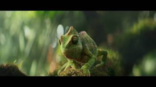 Dancing Chameleon  Have a nice weekend