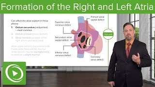 Formation of the Right and Left Atria: Ostium Secundum & Foramen Ovale – Embryology | Lecturio
