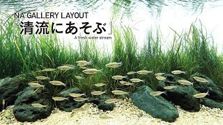 [ADA View] Nowy zbiornik w galerii - akwarium naturalne?