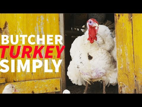 , title : 'Butcher a Turkey Simply Using Only Hand Tools