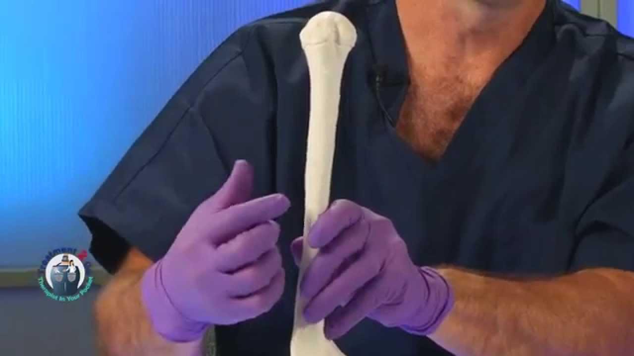 dissection C.E.U. course