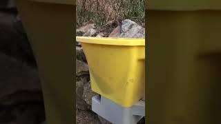 Snake Repellent Secret for Over 10 years for Backyard Garden