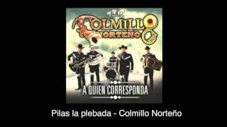 Pilas la plebada (Audio) - Colmillo Norteño (Video)