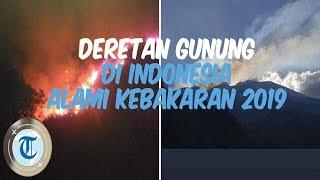 7 Gunung di Indonesia yang Mengalami Kebakaran di Tahun 2019
