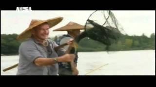 Ловля рыбы с помощью бакланов