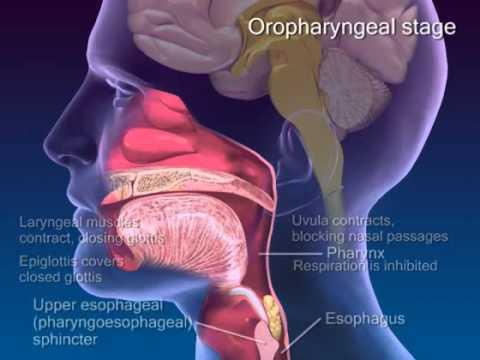 Die Hypertonie und die Osteochondrose