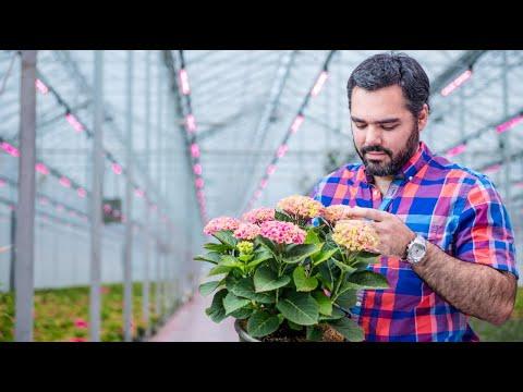 Philips LED Top Lighting - Van Belle Nursery thumbnail