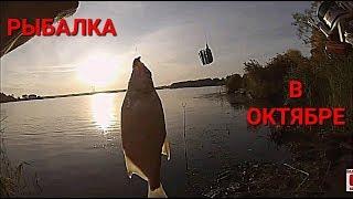 Фидерная рыбалка 2019 года октябрь