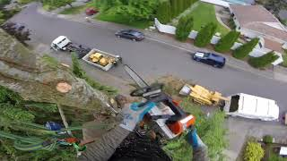 Crazy Close Call - Tree Topping Near Miss